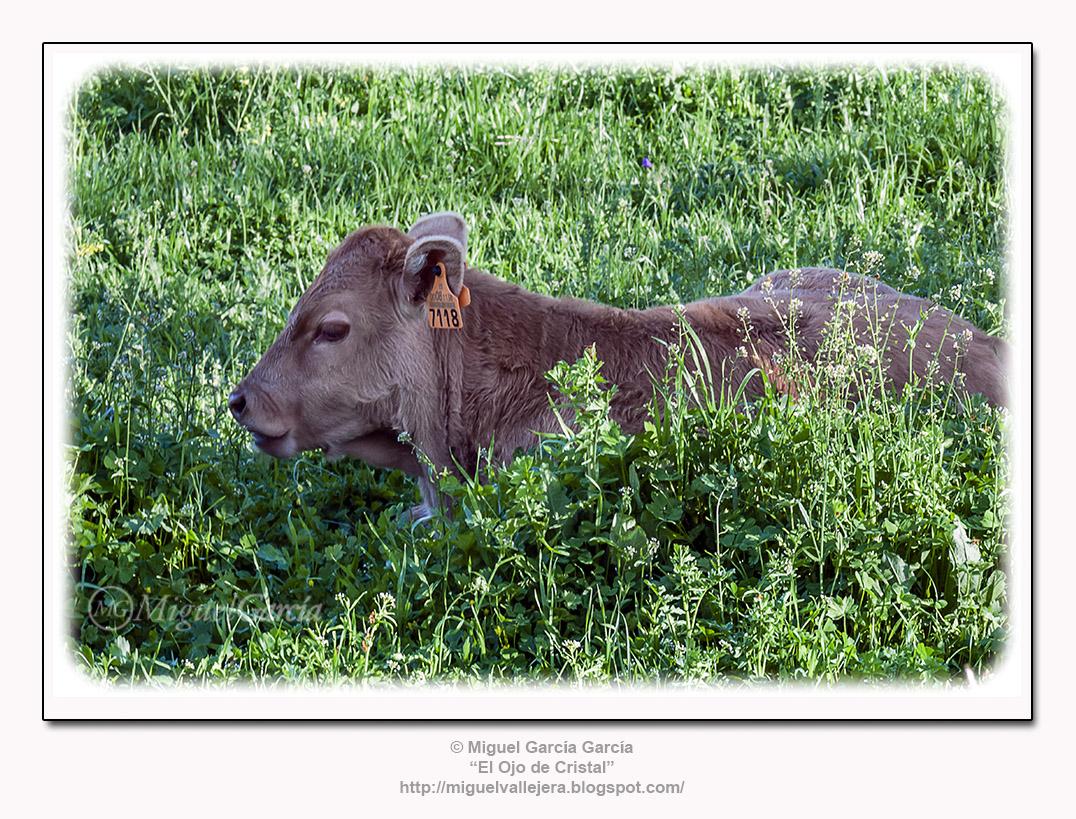 Valdesangil. Los días del esplendor sobre la hierba.