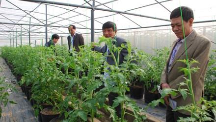 Tỷ phú đô la làm giàu từ trồng rau