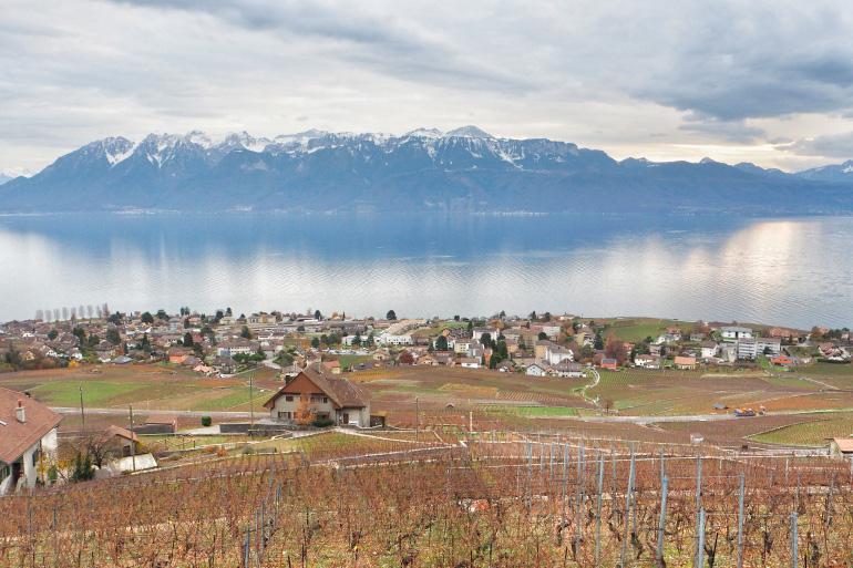 Vignoble aux alentours de Lausanne en Suisse