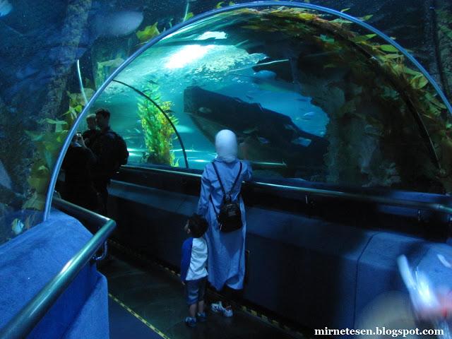 Аквариум Куала-Лумпура, тоннель с акулами