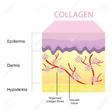 Youtonics Skin Collagen