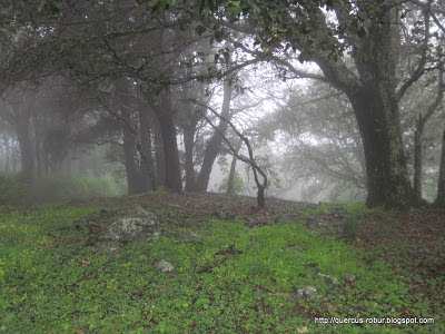Neblina en el oeste