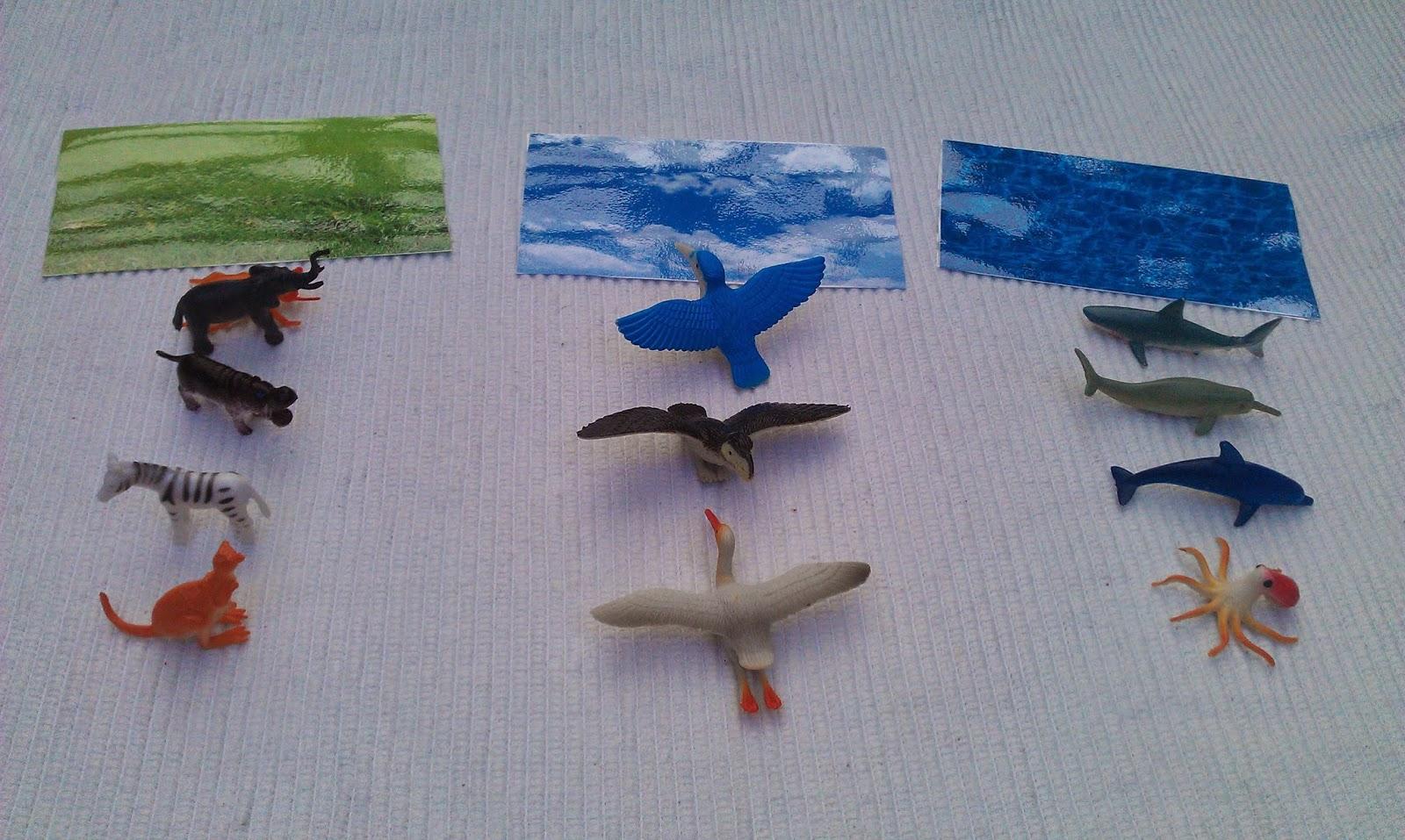Montessori Focus Land Water Air Activity