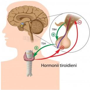 tiroidita basedow graves