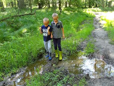 grzyby 2017, grzyby w maju, borowiki w maju, grzyby w Lesie Bronaczowa, pierwsze borowiki 2017, borowik ceglastopory