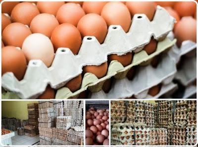 jual telur murah Jabodetabek