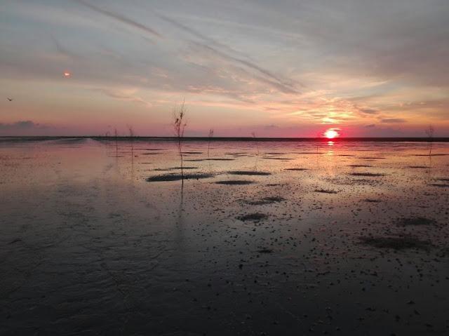 Spannende Touren ins dänische Wattenmeer: Interview mit Betty vom Vadehavscentret in Ribe. Der Sonnenuntergang über Dänemarks Wattenmeer ist wunderschön.