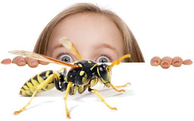 افضل شركة مكافحة حشرات بالدمام والقضاء عليها في الحال