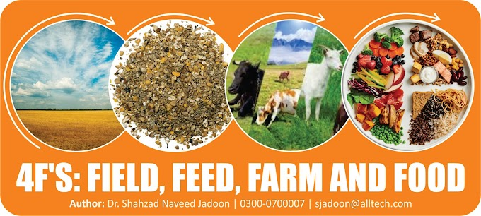 4F's: FIELD, FEED, FARM and FOOD