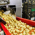 Food Processing Industry: Scope, Schemes & Challenges