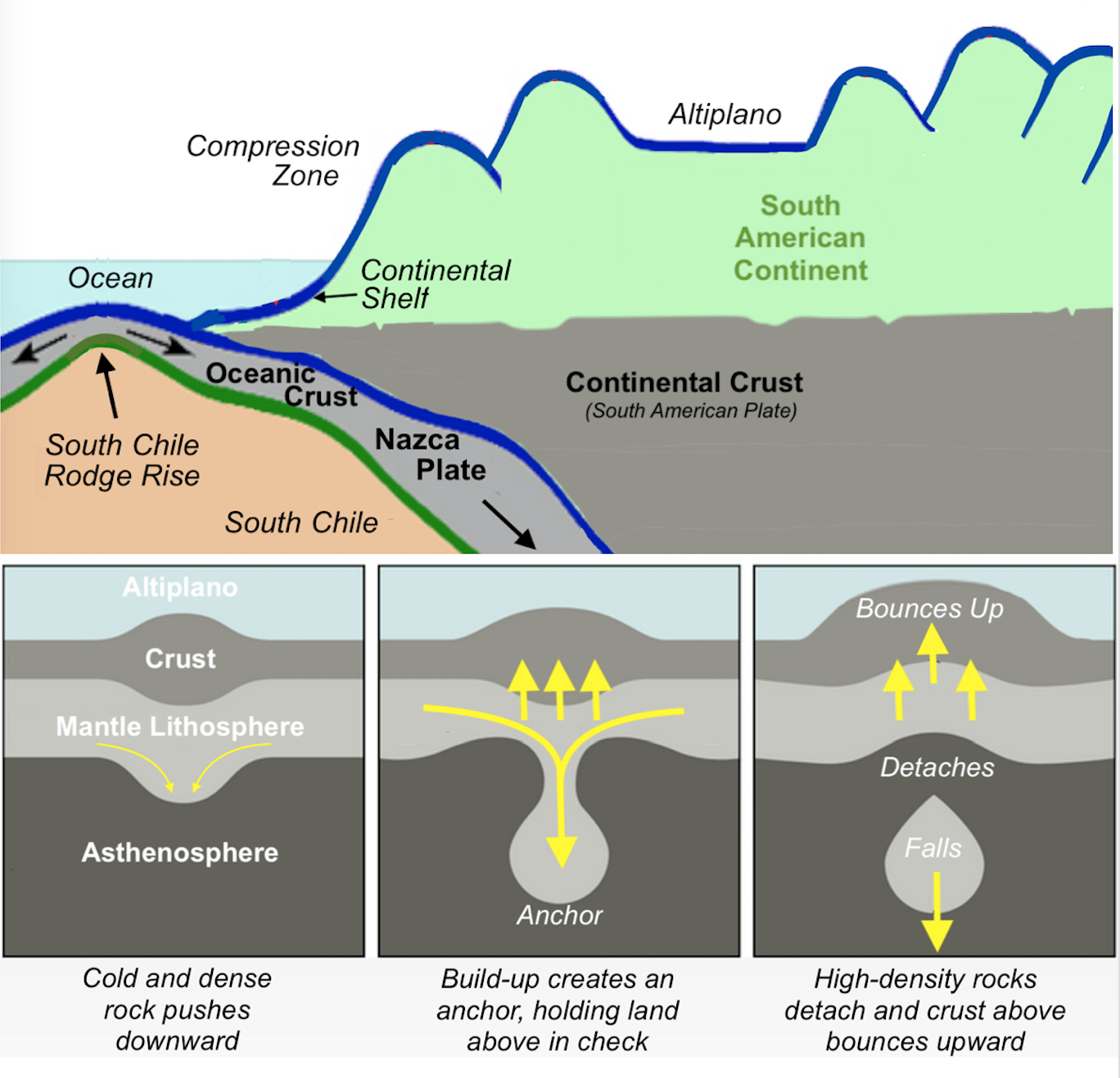 evidence suggests that the altiplano rose in pulses speedy for geologic phenomena through the dripping of dense rock called eclogite from the lower crust