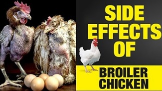 WHY WE SHOULD NOT EAT BROILER CHICKENS? | Broiler Chicken Side Effects in Tamil