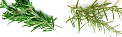 Rosemary Natural Home Remedies to Get Rid of Mosquitoes