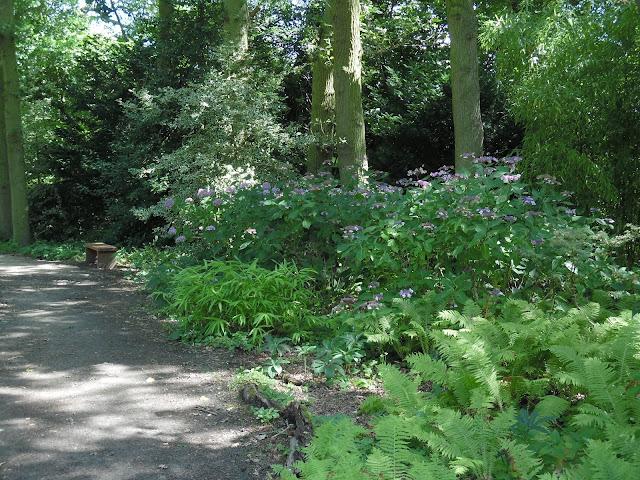 ogród leśny, ogród w cieniu