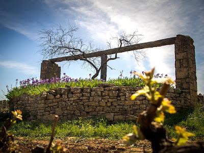 Mas de Torubio, pozo, pou, finca, Cretas, Queretes, viña, viñedo