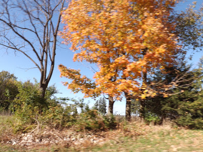 Metamora Herald spring trees