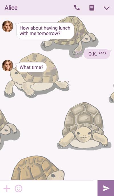 Tortoise illustrations theme No.1