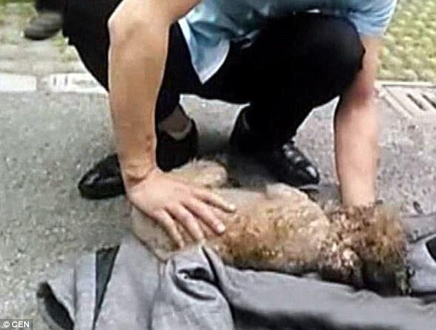 Maniobra reanimación rcp a un perro tras incendio