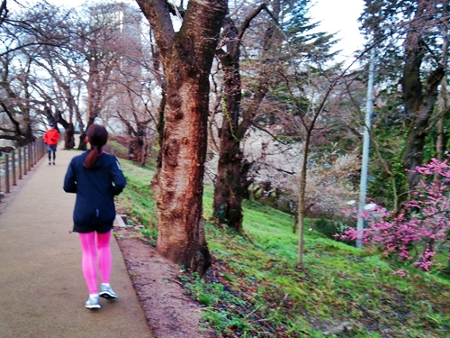 朝RUN@梅が満開の霞城公園