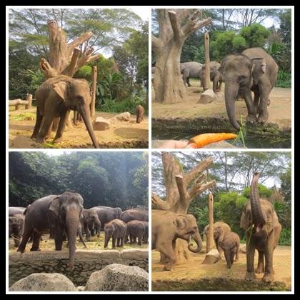 Taman Safari Indonesia 1