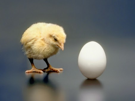 Telur / Ayam