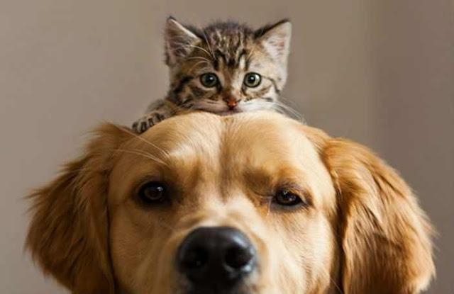 solutie pentru a alunga capusele si puricii de pe animale