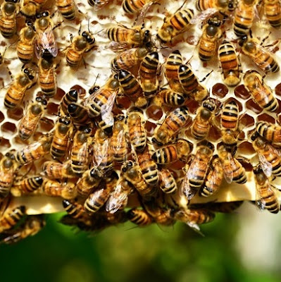 eight acres: beekeeping and happy neighbours