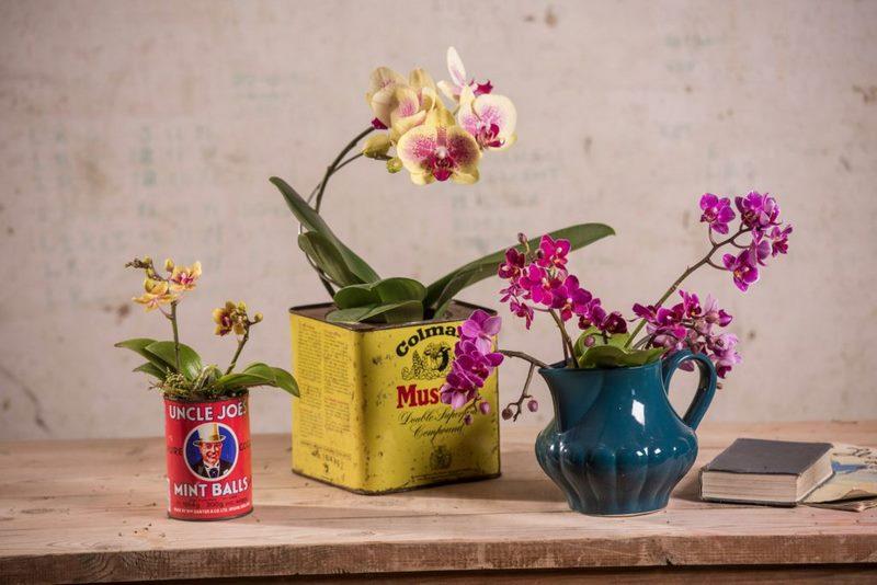 orquídeas en latas de conservas
