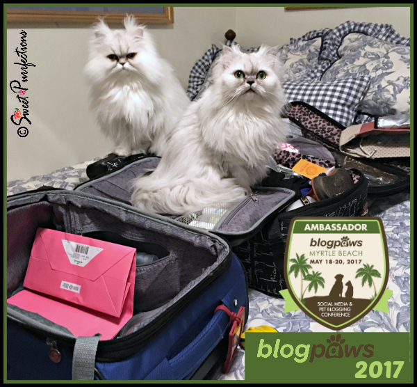 Brulee and Truffle packing for BlogPaws 2017