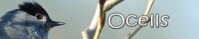 http://www.unzooencasa.com/p/ocells.html