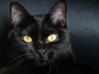 los gatos negros leyenda terror