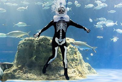 Odysea Aquarium Skeleton