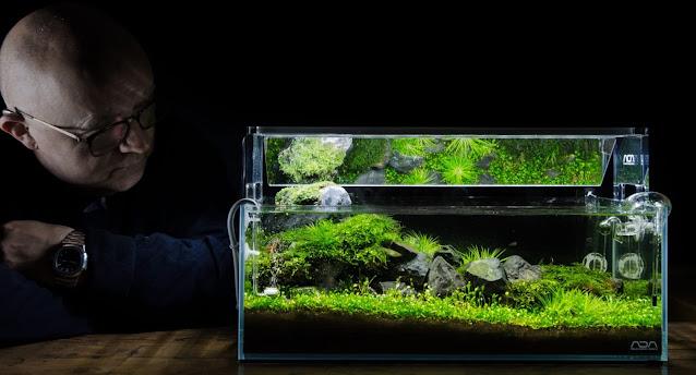 Ini Dia, Jenis Batu Yang Cocok Untuk Aquascape Beserta Harganya