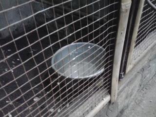 Burung Kacer - Model Kandang Penangkaran Untuk Burung Kacer