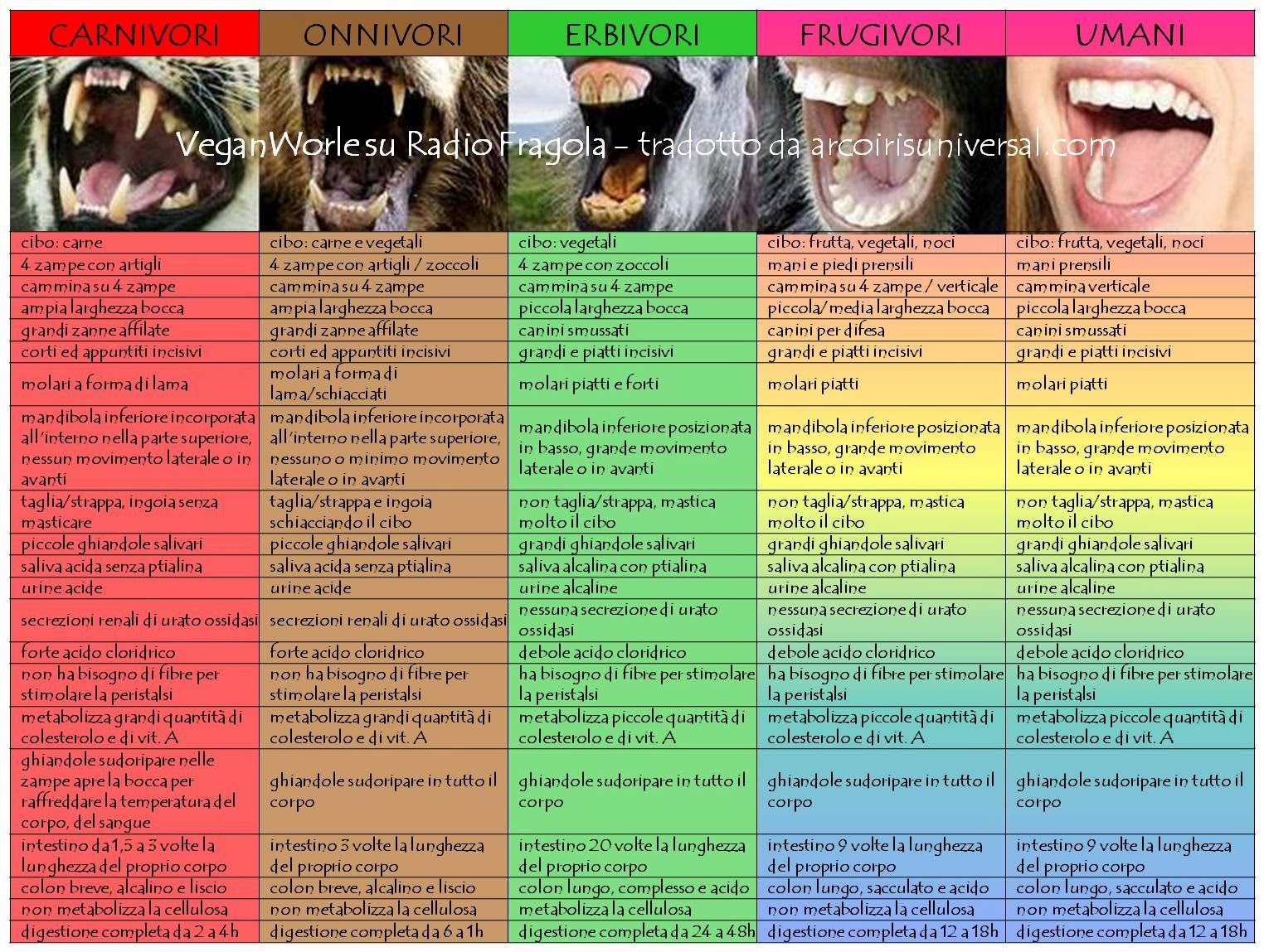 http://4.bp.blogspot.com/-01_EIPUqZmA/UxmszT6vw_I/AAAAAAAAAak/FCpOHnEus58/s1600/Anatomia+comparata2.jpg