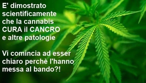 canapa_uccide_cancro_studi