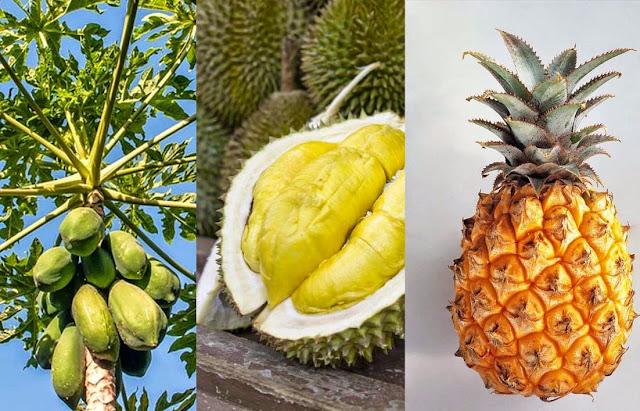 Jangan makan durian, nanas dan pepaya muda saat hamil, jika