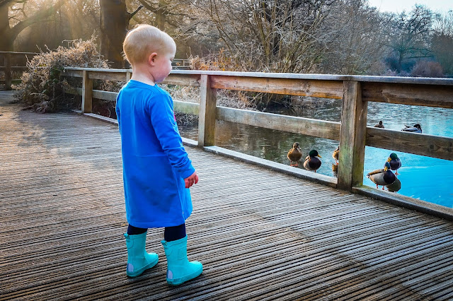 Little in a blue dress and blue boots looking at ducks on a lake