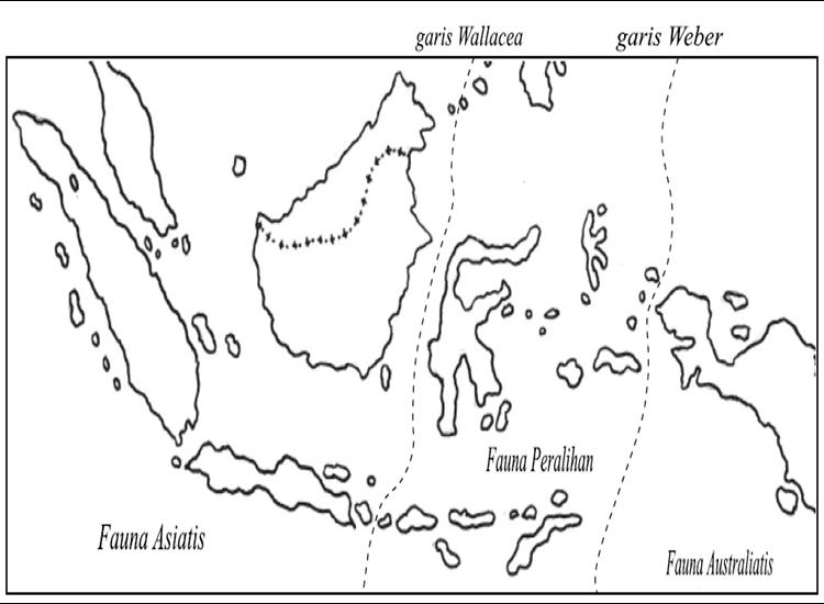 Gambar Gambar Peta Indonesia Diwarnai 13 Sketsa Terlengkap Koleksi