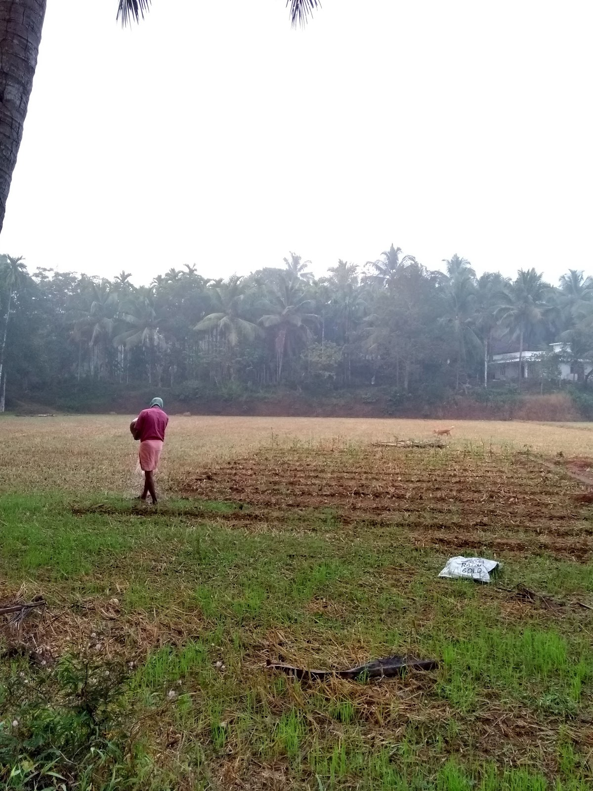 Morning, Farmer, Travel