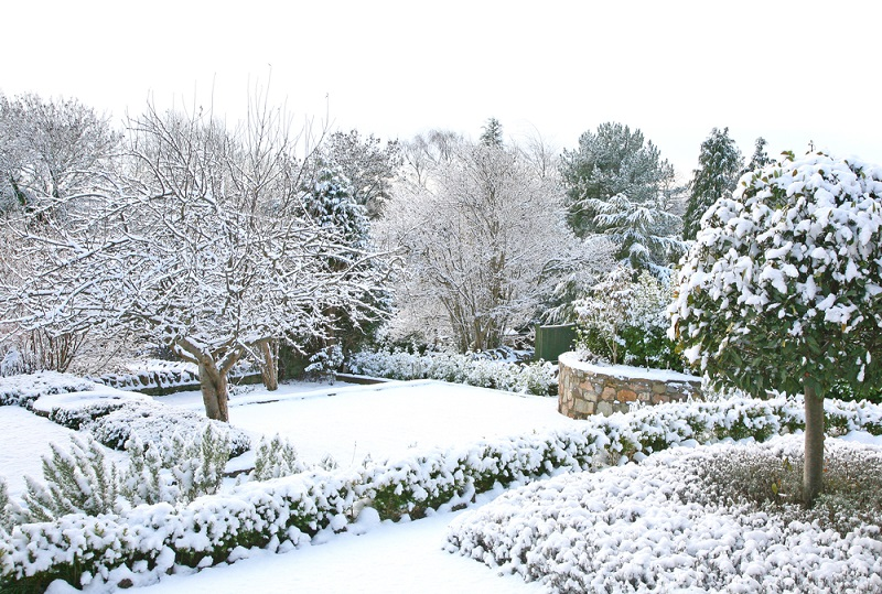 A Garden during winter with snow