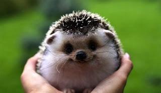 Cerita Pendek Anak Tiga Bahasa (Indonesia-Sunda-Inggris) Landak Baik Hati-Lanak nu Bageur-Sweet Hedgehog