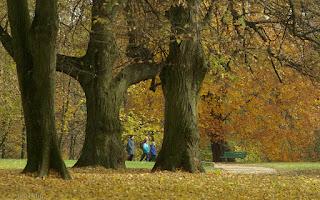 http://fotobabij.blogspot.com/2016/02/stare-drzewa-trzy-tapeta-4k-hd.html