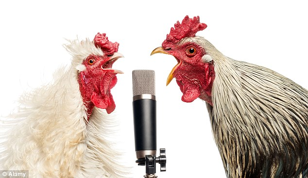 Image result for crowing roosters