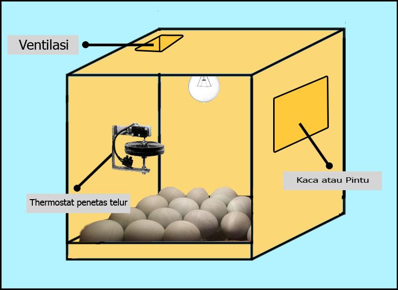 membuat mesin penetas telur yang sederhana