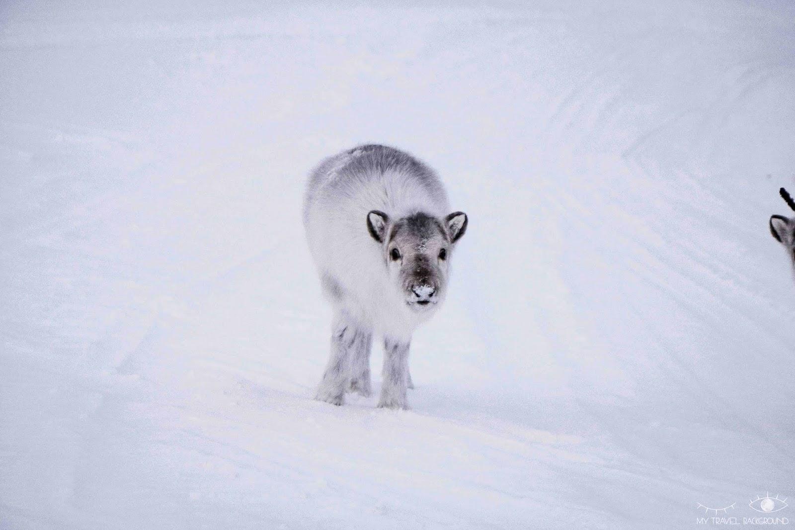 My Travel Background : 13 jours en Norvège et au Svalbard : itinéraire du road trip et infos pratiques - Renne au Svalbard