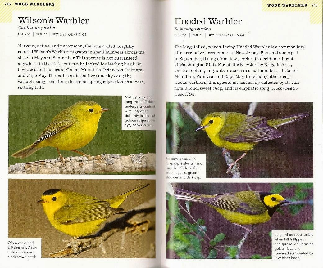 Pet Supplies Bird Supplies Expressive Bird Nests X 2 Breeding Nest Bird Box Bamboo Nest Canary Finch Budgie 5 X 3 Inch