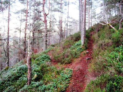 Deeside walks: a fork in the path around Craigendarroch
