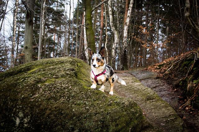 karkonosze z psem, podróże z psem, w góry z psem