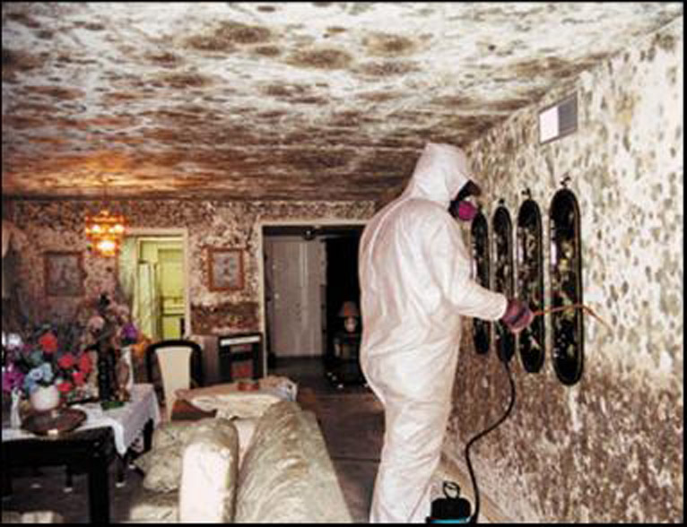 Do You Observed That Have Black Mold In Your House Is Mostly Some Sort Of Greenish Color Usually Ll Give The Option To
